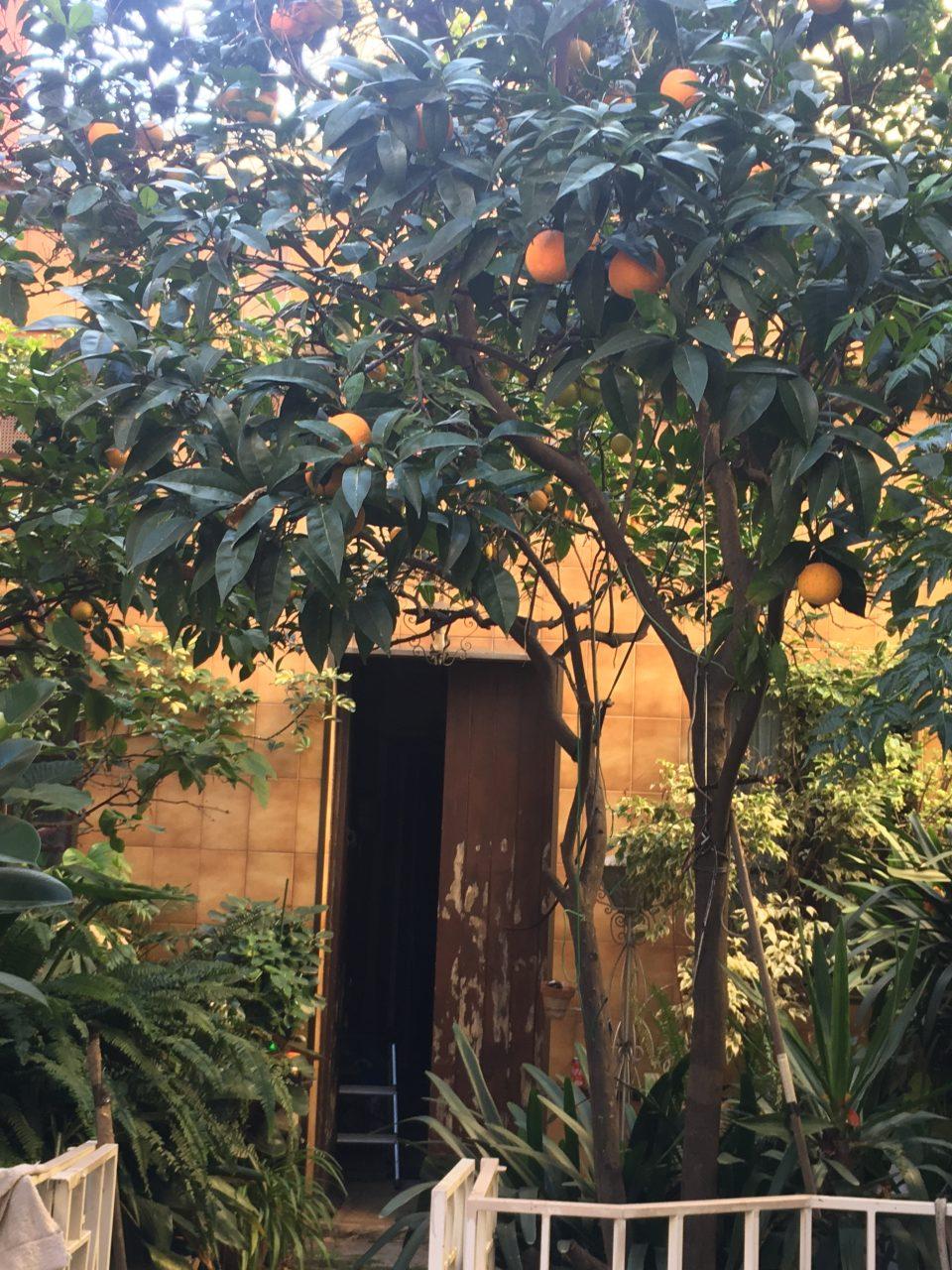 patio con los árboles de las naranjas y limons